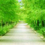 集中力アップは軽い運動とグリーンエクササイズ